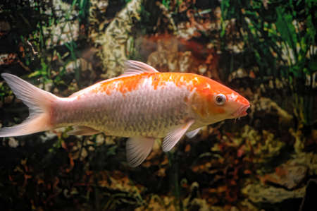 fish in water  photo