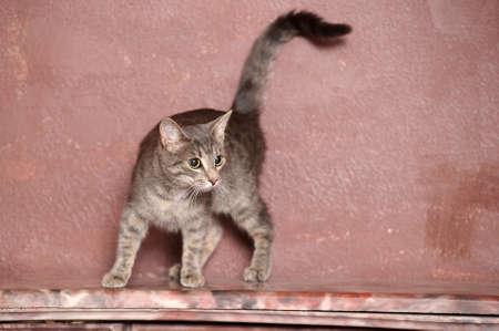 gray striped cat Stock Photo - 15038768