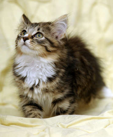 Portrait of a beautiful cat cute kitten photo