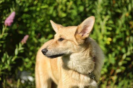 no correr: Perro rojo
