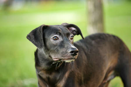 Black mixed breed portrait Stock Photo - 15000079