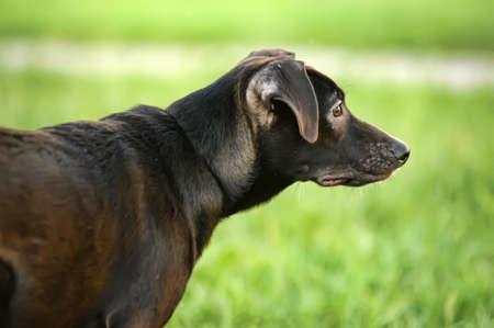 Black mixed breed portrait Stock Photo - 15000081