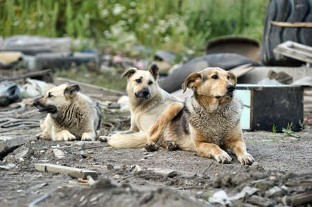pack of stray dogs Stock fotó