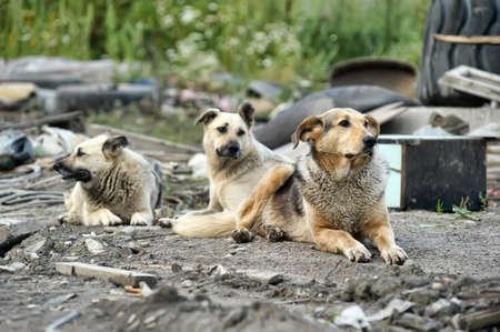 dog days: paquete de perros callejeros
