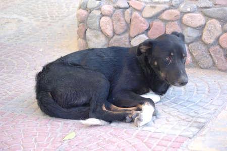 pathetic: homeless dog