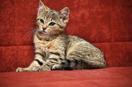 Cute gray kitten photo