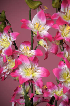 pink flowers Stock Photo - 15144595