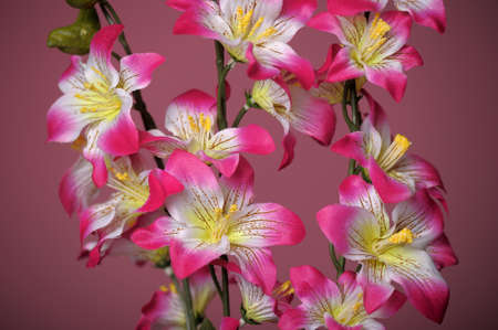 pink flowers Stock Photo - 15144794