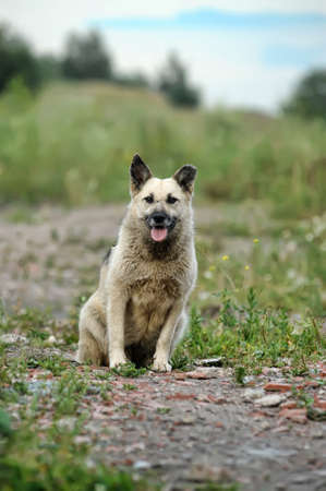 vagrant: Close up portrait of a stray dog Stock Photo