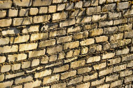 moss: Brick wall moss-grown Stock Photo