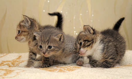 Three kittens photo