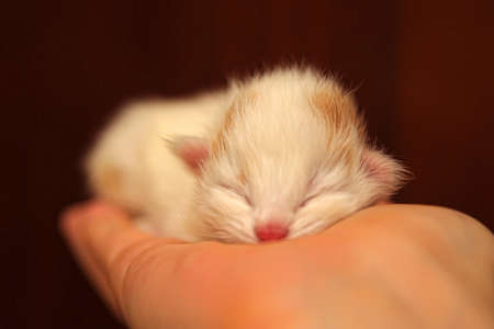 Kitten on a hand photo