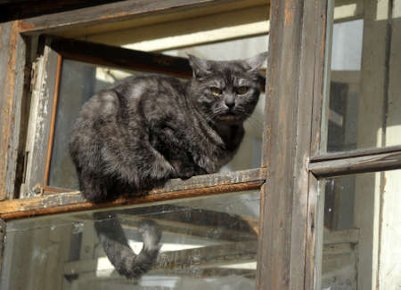 Cat sitting on a window  Stock Photo - 15148539