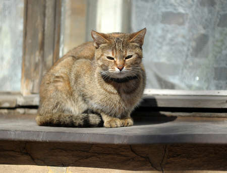 Cat sitting on a window Stock Photo - 15148520