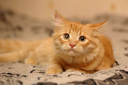 Whiskered cat photo