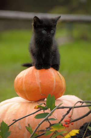calabazas de halloween: gato negro sentado en calabaza