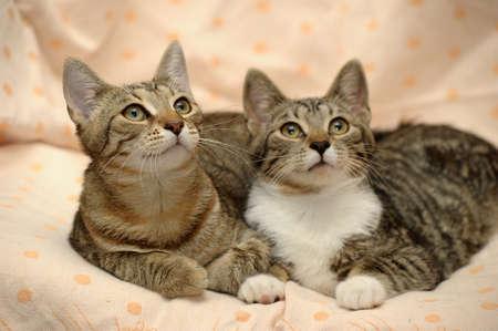 gemelos niÑo y niÑa: dos cerca gato rayado Foto de archivo