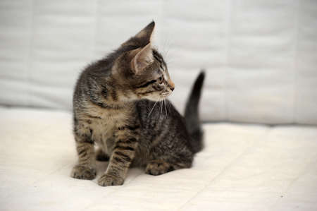 cute tabby kitten Stock Photo - 15353011