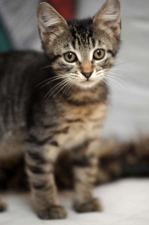 cute tabby kitten Stock Photo - 15352969
