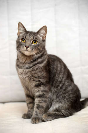 gray cat: gray striped cat