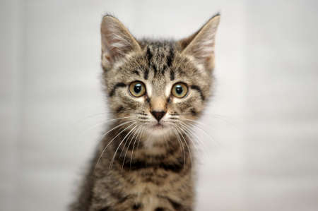 kitten small white: cute tabby kitten Stock Photo