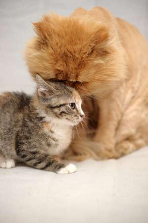 gray cat: Cat And Kitten  Stock Photo