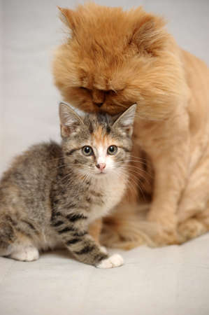 Cat And Kitten  photo