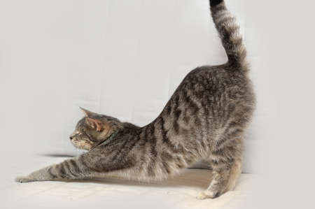 cat stretching: cat stretches Stock Photo