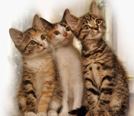 Three kittens Stock Photo - 15374065