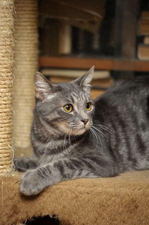 Gray cat photo