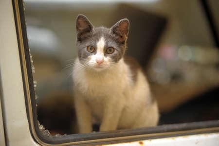 homeless cat Stock Photo - 15364402