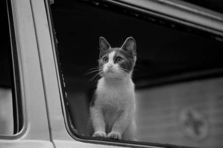 homeless cat Stock Photo - 15364505