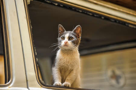 homeless cat Stock Photo - 15364511