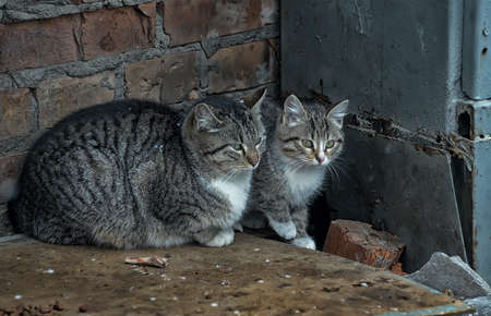 HOMELESS CATS Stock Photo - 15364441