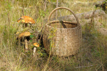 basket and mushrooms photo