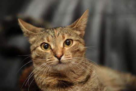tabby cat Stock Photo - 15427915