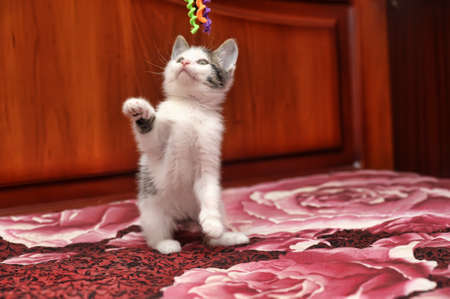 kitten Stock Photo - 15809056