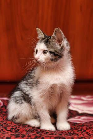 kitten Stock Photo - 15809052