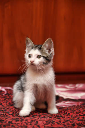 kitten Stock Photo - 15809059