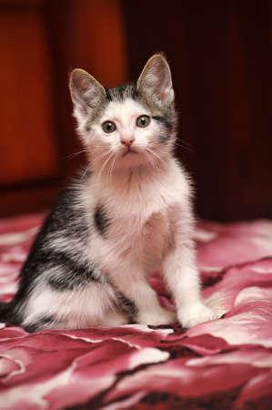 kitten Stock Photo - 15809057
