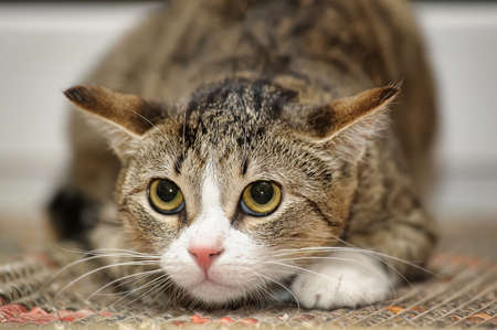 frightened tabby cat photo