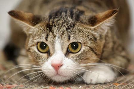 frightened tabby cat
