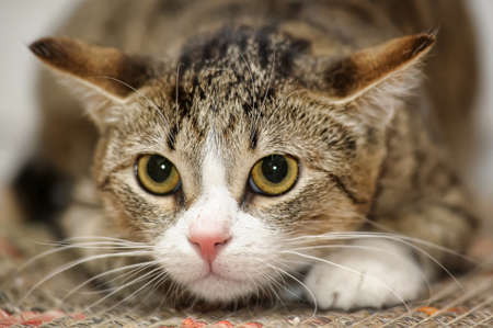 frightened tabby cat Stock Photo - 15427542