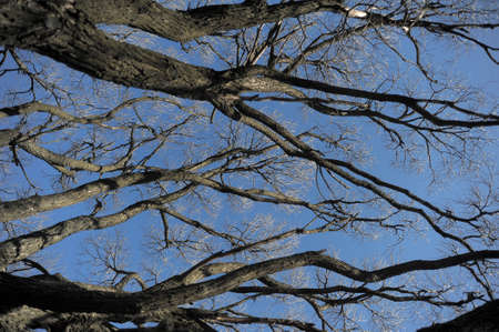 Branches of a tree against the sky photo