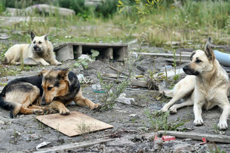 humane: pack of stray dogs Stock Photo