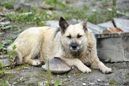 Stray dog Stock Photo - 15420449