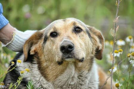 fleas:  Stray dog