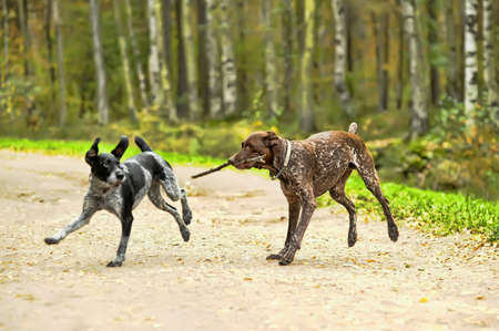 Dos perros photo