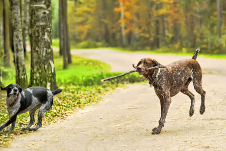 Two dogs  photo
