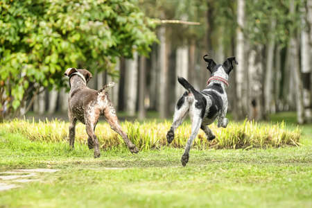 Two dogs Stock Photo - 15479254